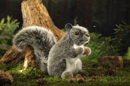 Kösener-Amerikanisches Eichhörnchen