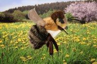 Kösener -Biene