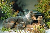 Kösener Wölfin Janina. liegend 124cm Plüschtier