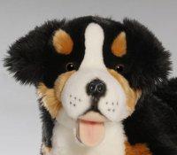 Berner Sennenhund liegend 60 cm