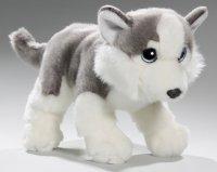 Husky mit großen Augen 28 cm