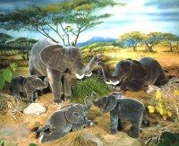 Kösener- Elefant Matibi liegend