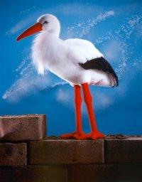 Kösener-Storch Adebar