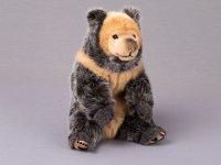 Kösener-Tibetischer Bär
