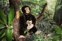 Kösener - Schimpanse klein