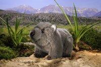 Kösener -Wombat Kind