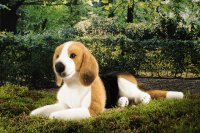 Kösener-Beagle liegend