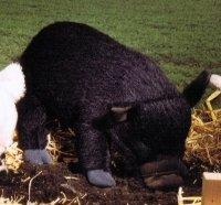 Plüsch Esel grau 32 cm