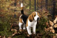 Kösener-Beagle