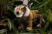 Kösener-Tiger