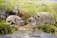 Kösener-Nilpferd, mittel, liegend